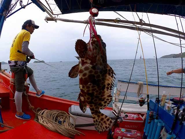 カモンハタ バンサレー 船釣り