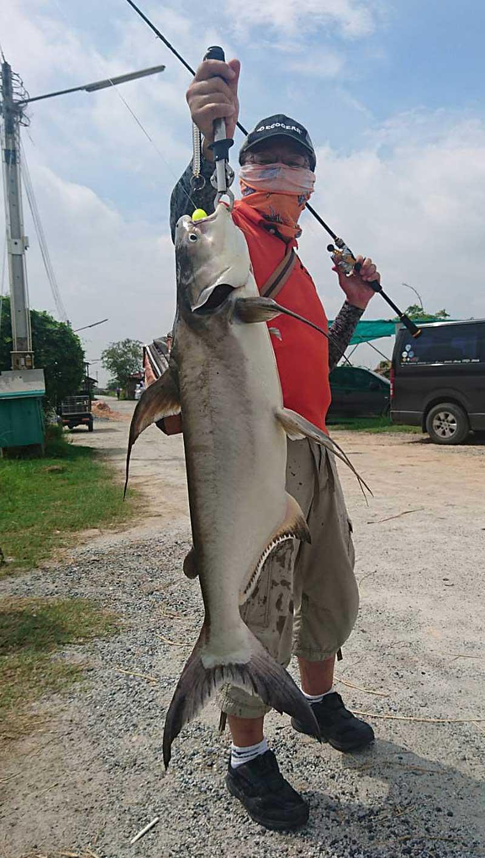 BENKEI 弁慶 チャオプラヤキャットフィッシュ 魚持ち
