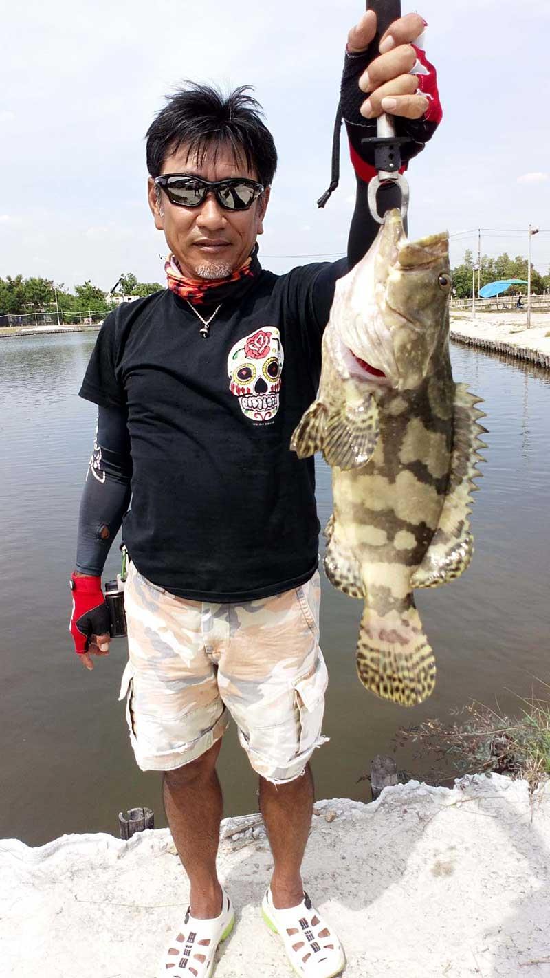 VIP Fishing ハタ