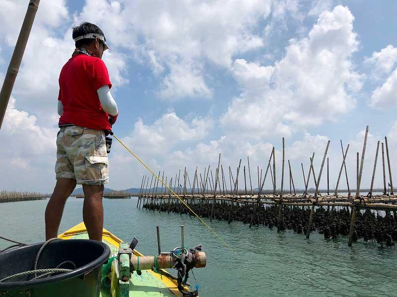 バンサイ 牡蠣筏 カキ