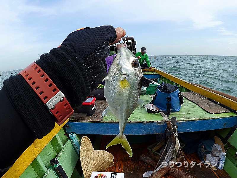 タイ バンサイ ギマ 釣り