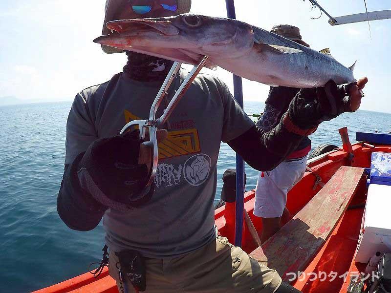 シーチャン島 バラクーダ 釣り