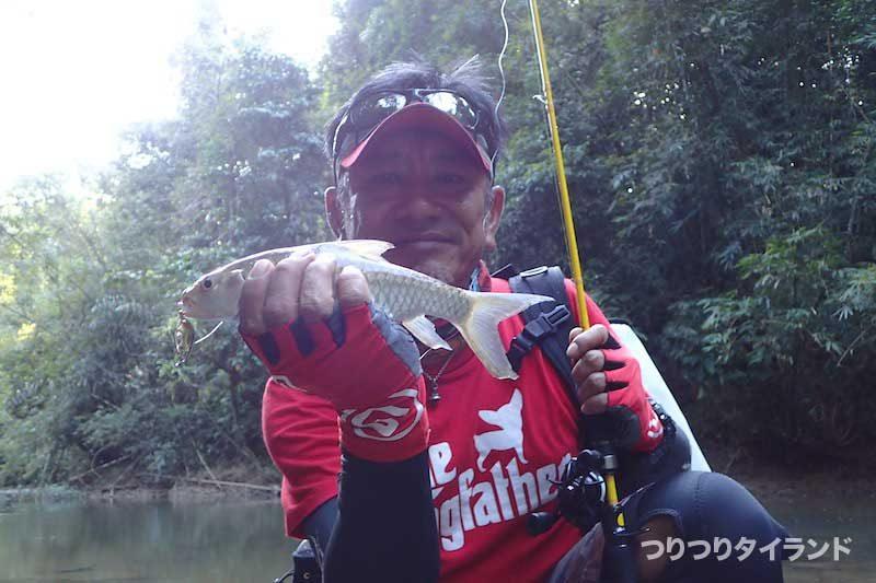 タイ マシール 釣り