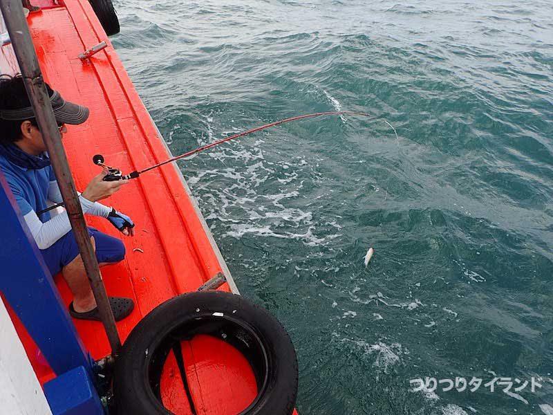 小魚が釣れる