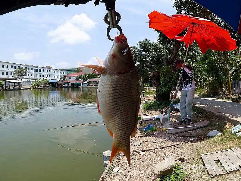 Nanafishingの鯉