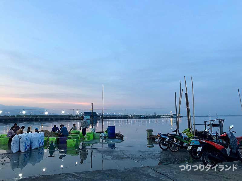 バンサイ 港 牡蠣作業
