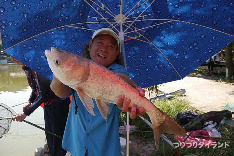 レンギョ コクレン タイの釣り堀