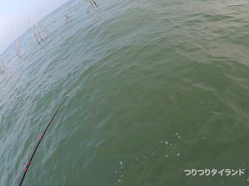 水中のギマ
