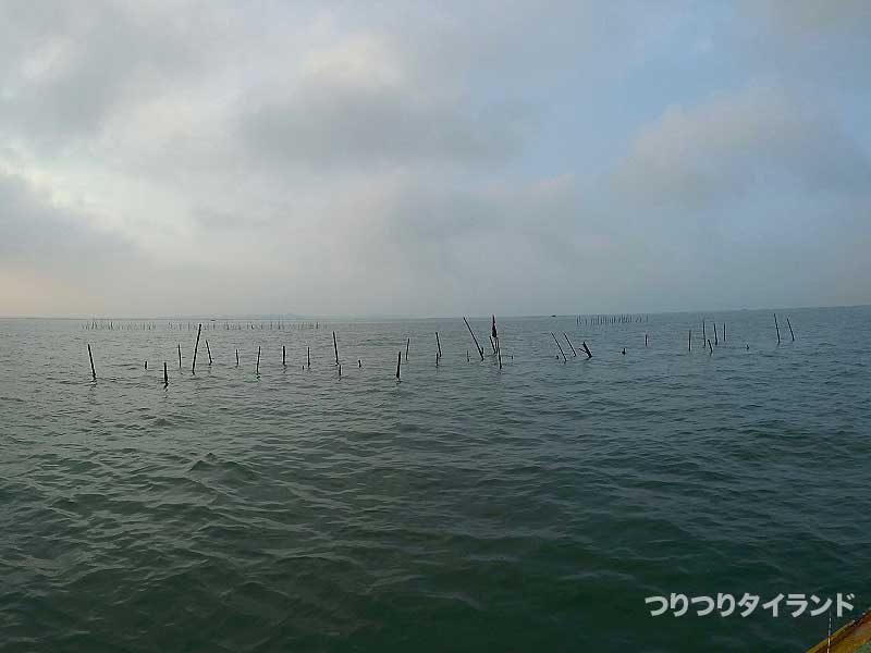 ミドリイガイの筏