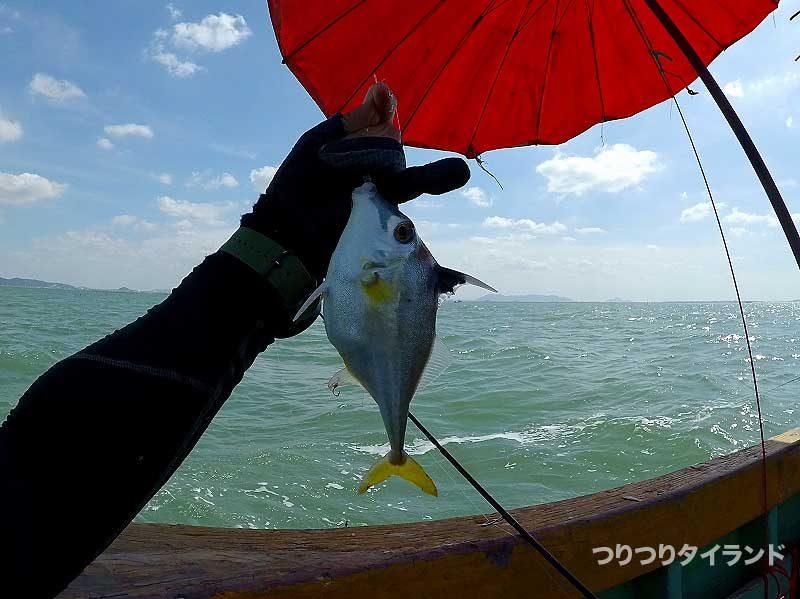タイランド湾のギマ