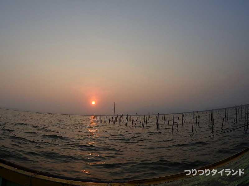 ミドリイガイ筏と朝日