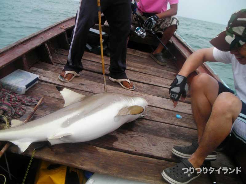 釣り上げたサメ