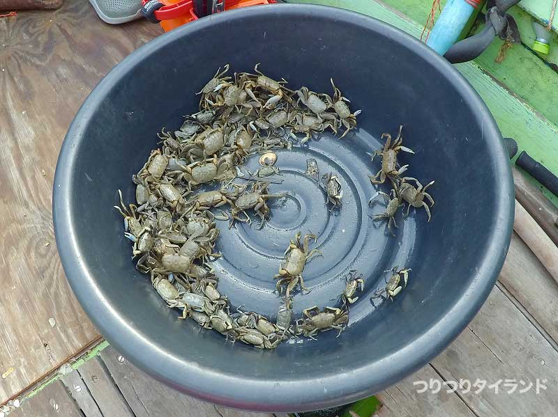 活蟹のエサ