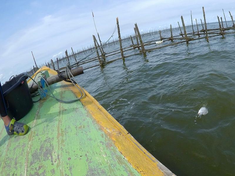 タイランド湾 チヌ