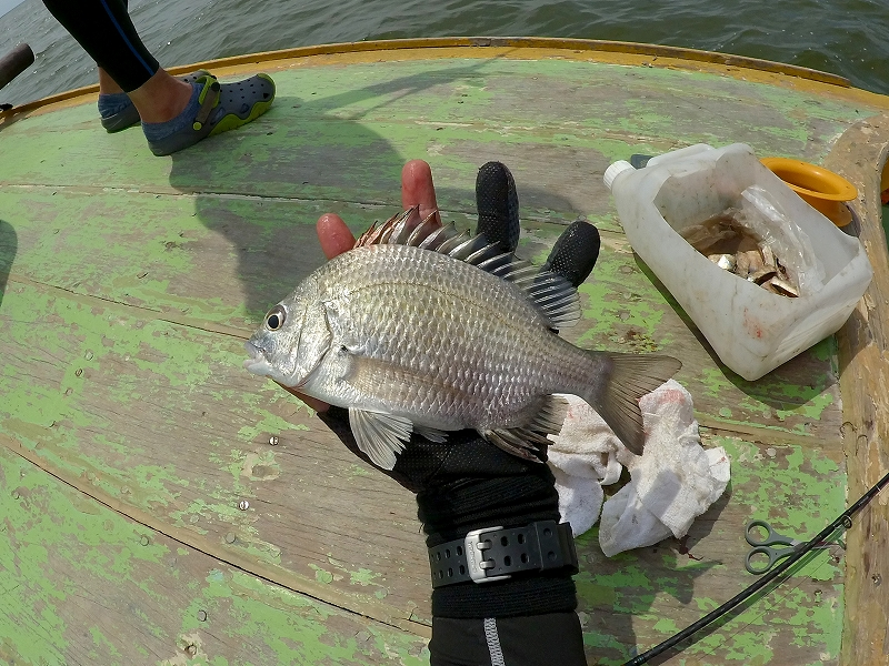 バンサイで釣ったナンヨウチヌ