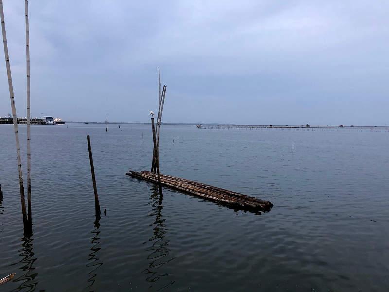 バンサイ チヌ 釣り場