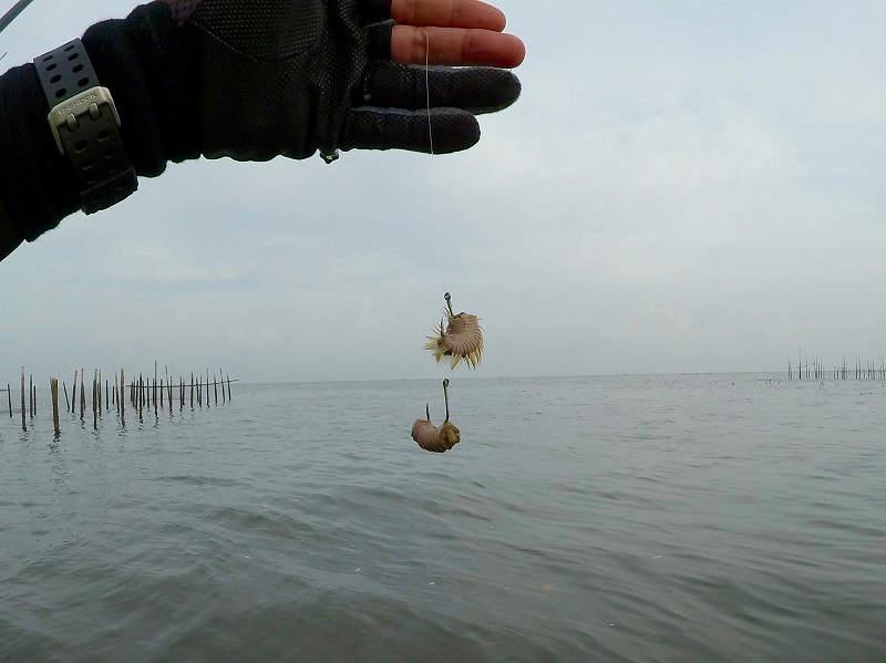 針に刺したブン 海毛虫