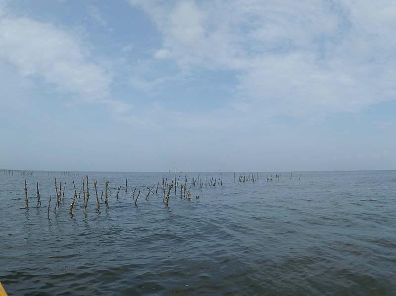 釣り場 イガイ筏