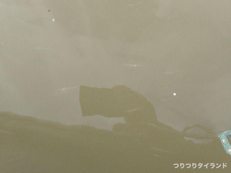 水面下の海老