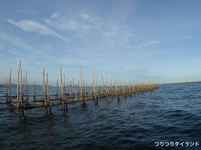 イガイ筏 チヌ釣り場