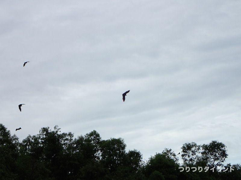 タイランドで飛んでいるコウモリ