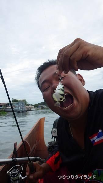 小型の鉄砲魚