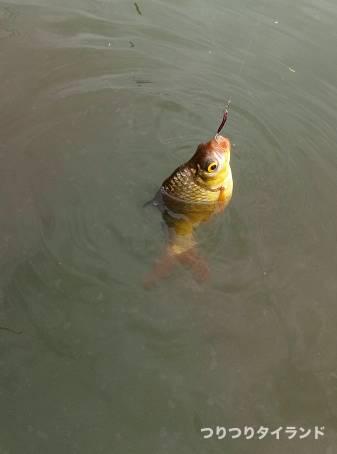 釣れたガヘー