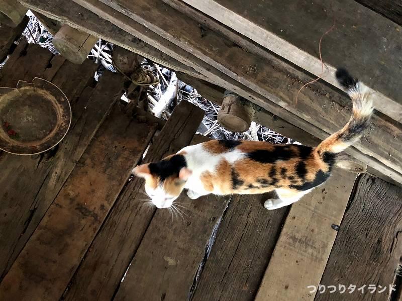 バンパコン川 猫