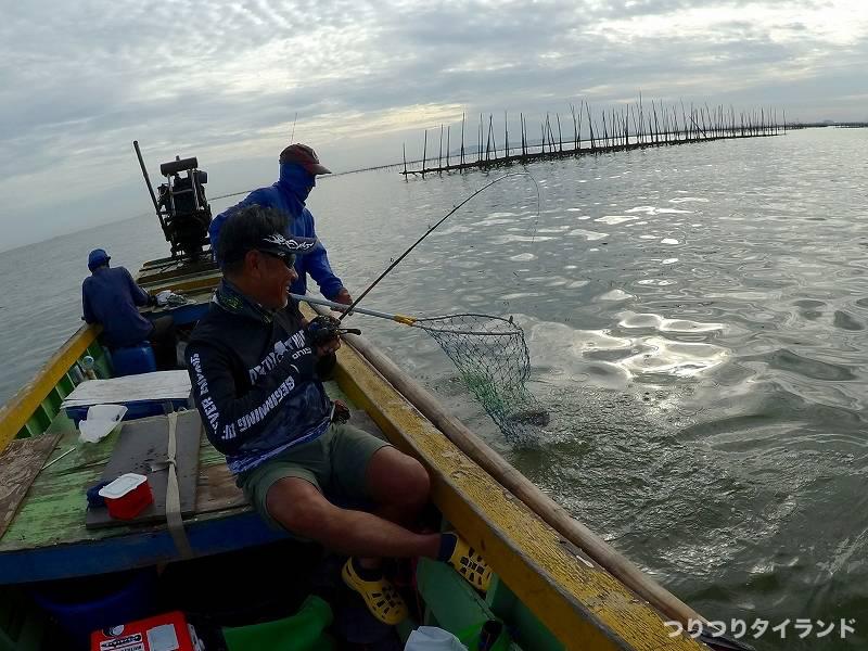 タイランド湾 海ナマズ プラードゥックタレー