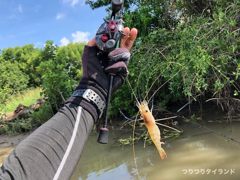 テッチャンが釣ったオニテナガエビ