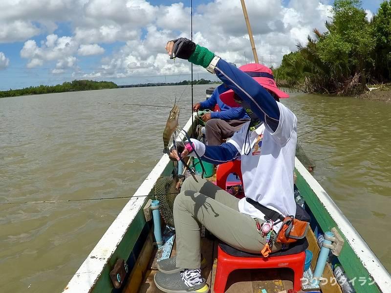 タイランド 天然オニテナガエビを持つ