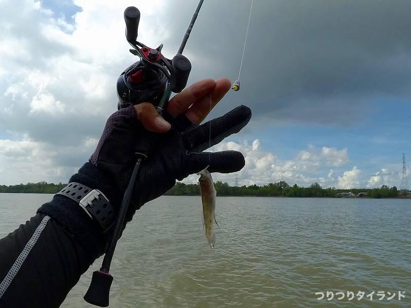 バンパコン川 釣り ハゼ