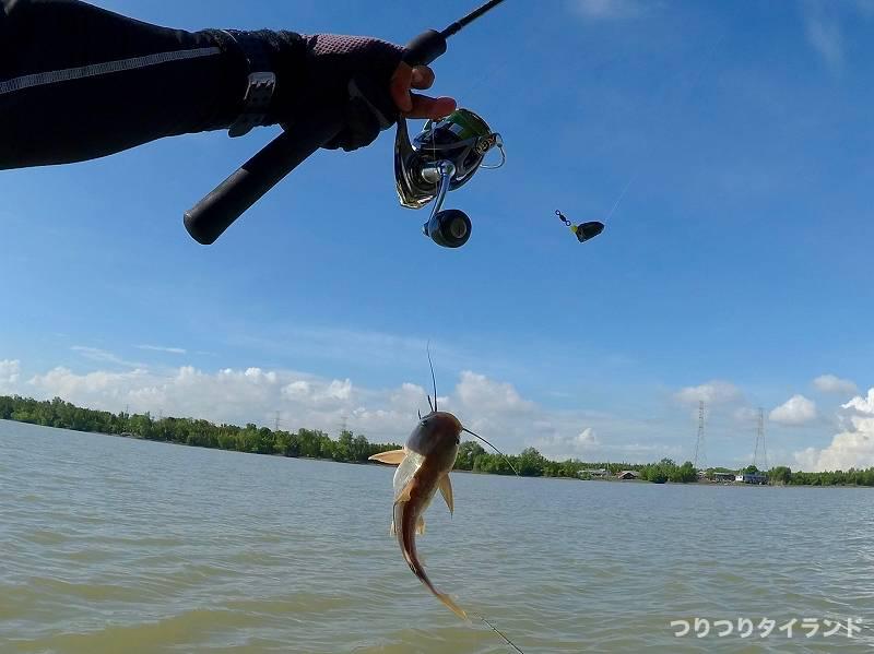 タイで釣れたギギ