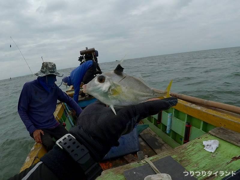 釣れたギマ タイ