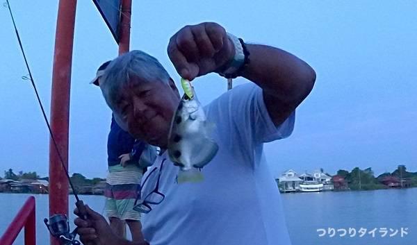 チャオプラヤ川 鉄砲魚 釣る