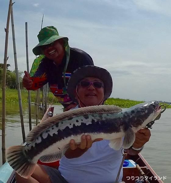 チャオプラヤ川のチャドー 釣れた