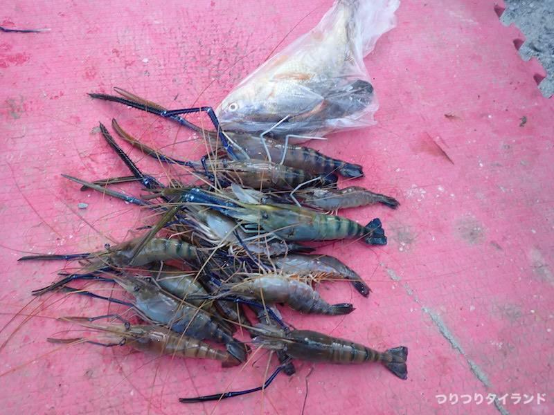 バンパコン川 エビ釣り釣果