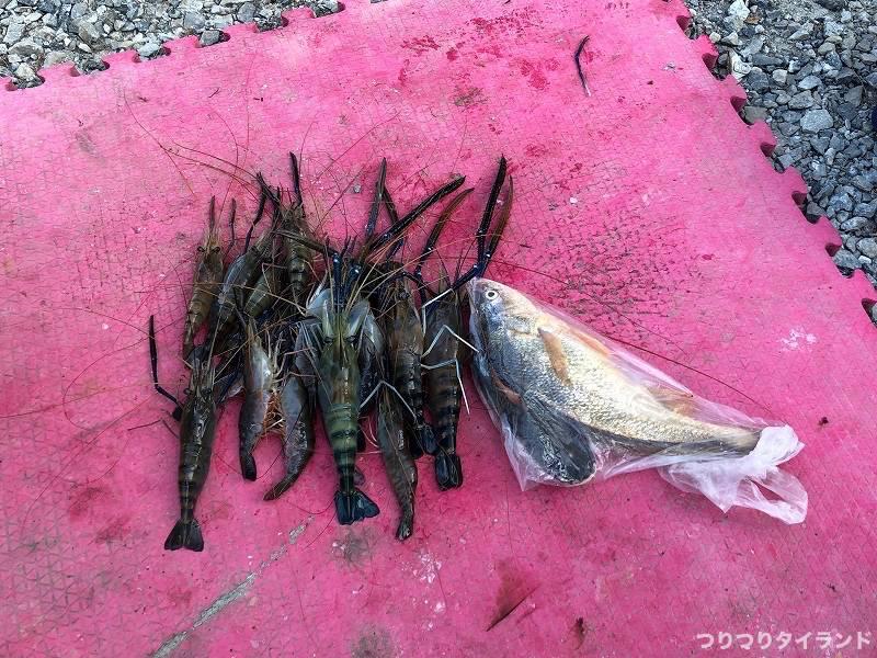 バンパコン川のオニテナガエビの釣果