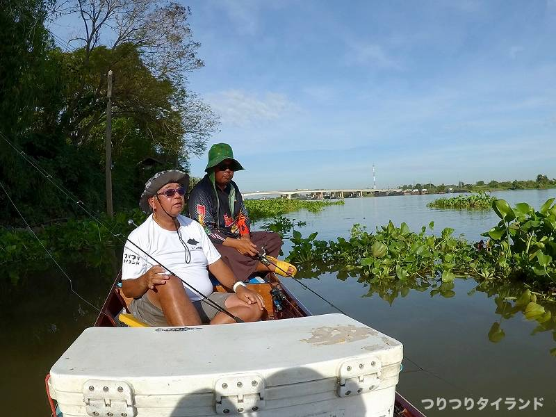 ホテイアオイ チャオプラヤ川