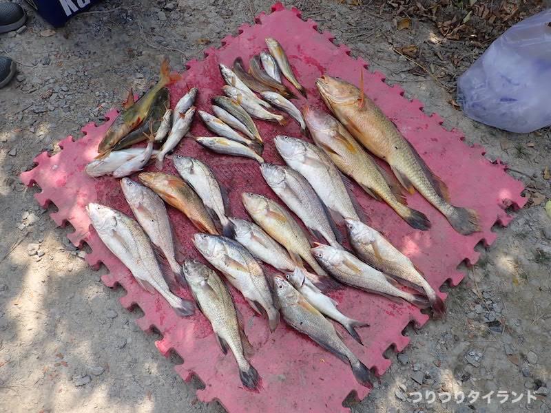 バンパコン川の釣果