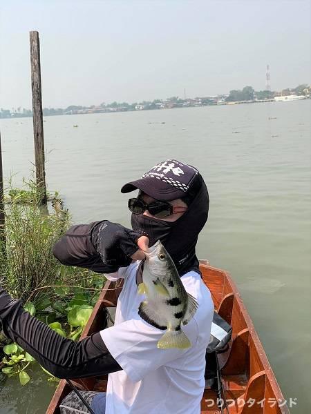 チャオプラヤ川 鉄砲魚 テッポウウオ